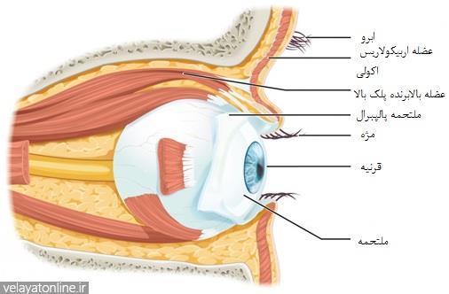 سیستم بینایی